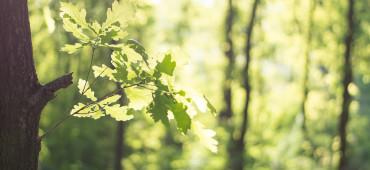 Ökologisch & Nachhaltig